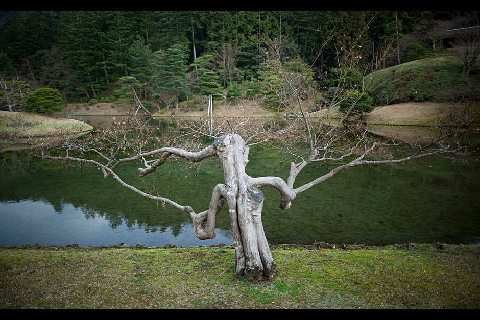 A tree in the Shugakuin Imperial Villa echoes the human form. Stephanie Mitchell/Harvard Staff Photographer