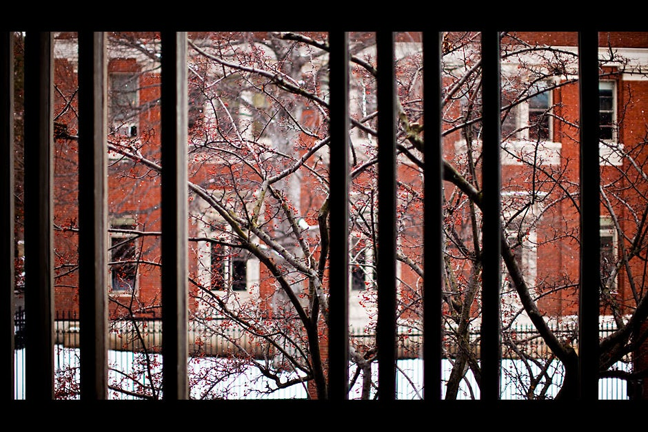 The view from the Carpenter Center segments the medley of snow, crimson berries, and snarled branches.