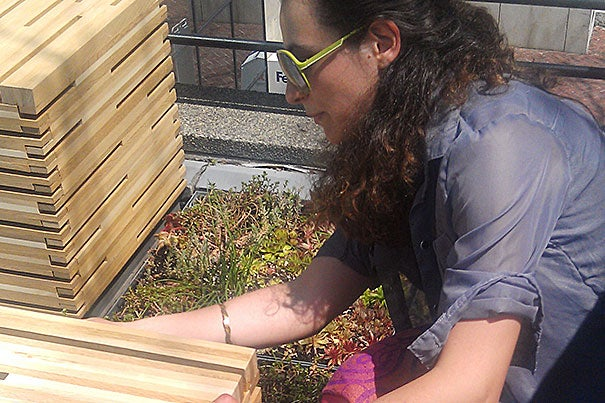 """""""The system is designed to be moved, changed, and adapted,"""" said Ecaterina Dobrescu of modular rooftop planters at Gund Hall that will reduce the quantity and speed of stormwater running off the building's roof."""