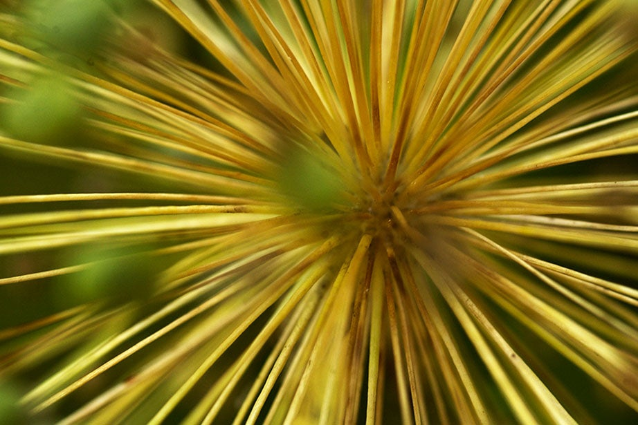 An up-close view of a bloom. Stephanie Mitchell/Harvard Staff Photographer
