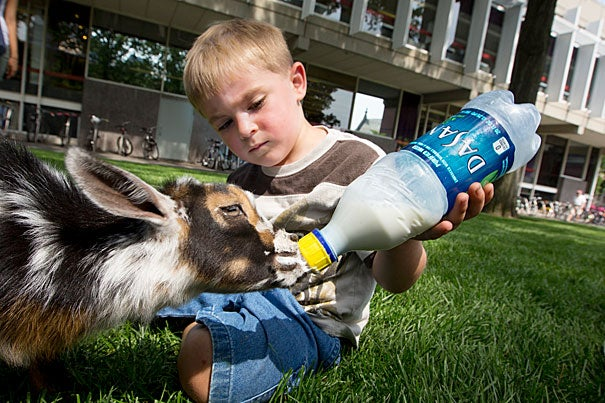 Landon Richard, age 4, feeds Cosmo, a 1-month-old goat (photo 1). Over the next few Thursdays, students and visitors to Harvard Yard can pet and play with animals as part of a community-building event by Common Spaces.