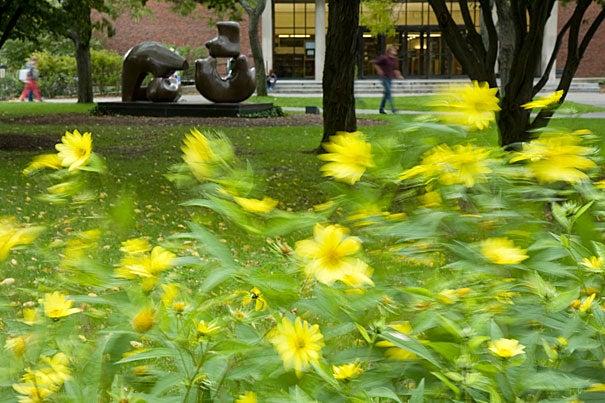 (Cambridge, MA - Oct. 3, 2008) - feature at Harvard University.  Staff photo Jon Chase/Harvard University News Office