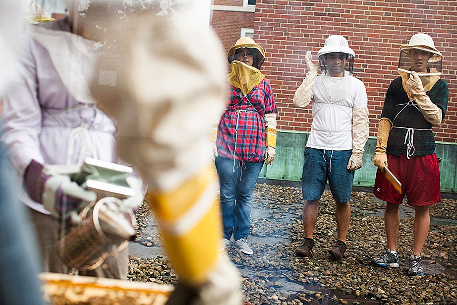 Georgia Shelton '14 (from center), Ben Stamas '14, and Austin Chen '16 watch as fellow beekeepers examine the hive.
