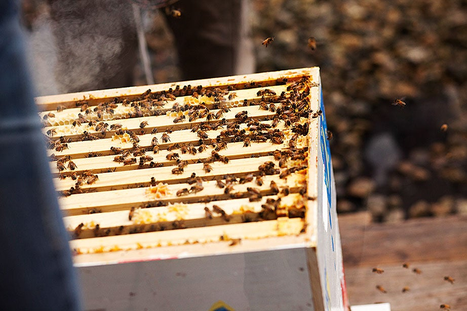 The bees swarm.