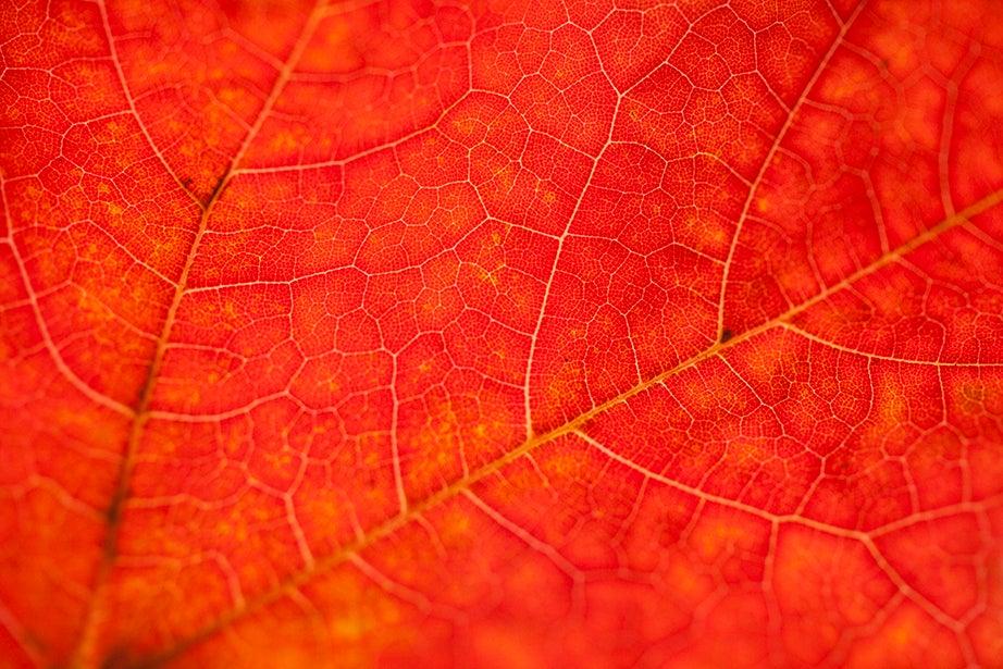 """""""Every leaf a miracle"""" (Walt Whitman)"""