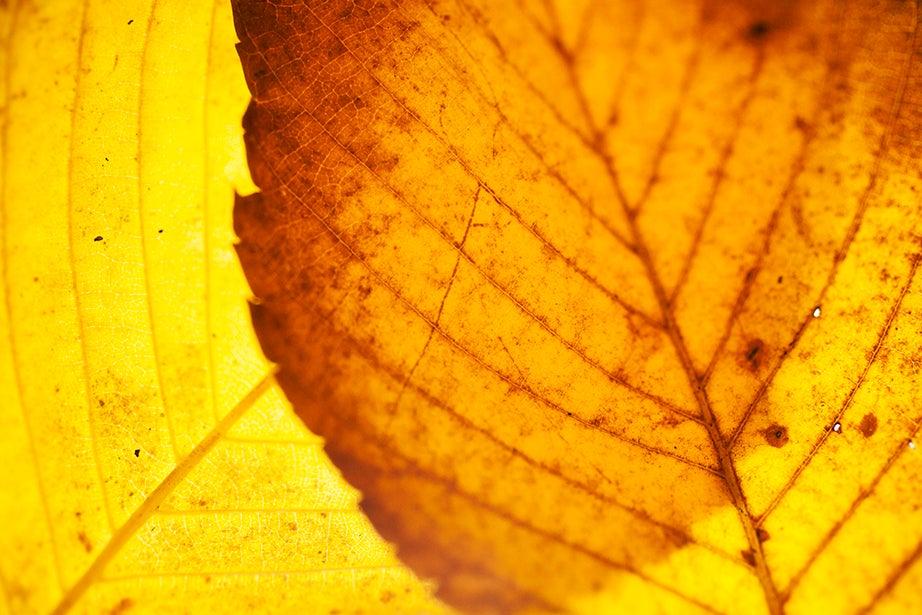 """To the great tree-loving fraternity we belong"" (Henry Ward Beecher)"