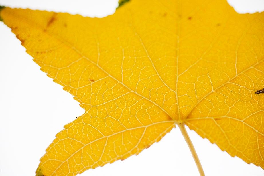 """Every leaf speaks bliss to me"" (Emily Brontë)"