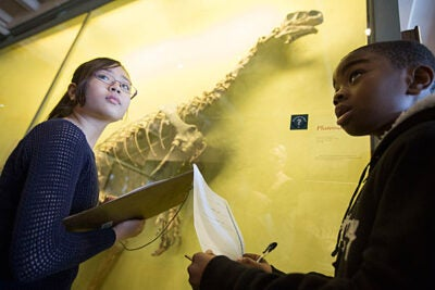 """At the Harvard Museum of Natural History, Rindge Avenue Upper School students got a taste of life before them. Yvonne Salazar and Kemani Holder checked out a Kronosaurus (photo 1), while gallery guide Curt Smith talked other dinosaurs with Teesa Manandhar and Larisa Cay (photo 2). """"HMNH is all about kids"""" in local schools, said Rindge teacher David Suchy (photo 3), who helped out Nafisa Farah (from left), Salazar, and Cay."""