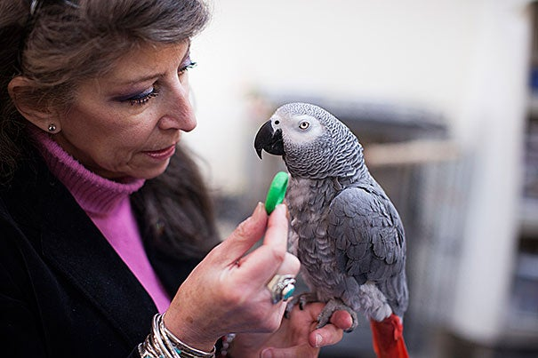 In her research, Irene Pepperberg found that Griffin, an African grey parrot, gradually came to understand that he would get a better payoff by picking the green cup — and sharing the reward.