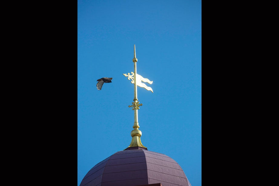 A hawk takes off from the weather vane of Dillon Field House.