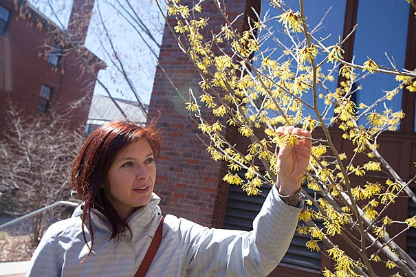 """I wanted to create something that made herbal medicine accessible,"" said Steph Zabel, a curatorial assistant at the Harvard Herbarium and founder of Herbstalk, a two-day educational festival based in Somerville that features classes on how to use herbs and plants, like hazel blossoms, seen here."