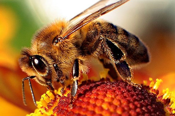 Researchers have isolated two insecticides and added colder winters to the list of causes for the collapse of honeybee colonies.