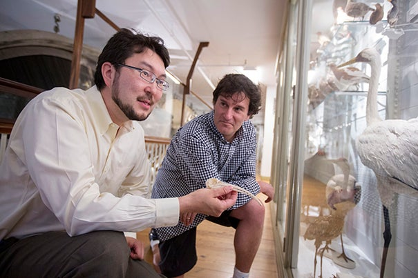 Arkhat Abzhanov (left), associate professor of organismic and evolutionary biology, and Michael Brenner, Glover Professor of Applied Mathematics and Applied Physics,  co-lead authors of a new study that looks at how developmental mechanisms both allow for great variability and create powerful constraints on the shape of the beaks of song birds.