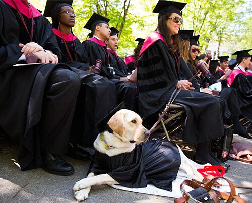Capturing a moment in history. During Commencement, Harvard Law School graduate Kristin Fleschner enjoyed the ceremony with her Seeing Eye dog, Zoe, dressed in regalia. Photo by Stephanie Mitchell/Harvard Staff Photographer