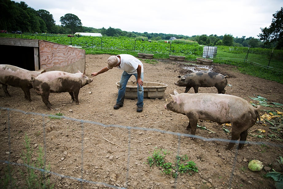 Dave Purpura steps in the pen to feed — and pet — his pigs.