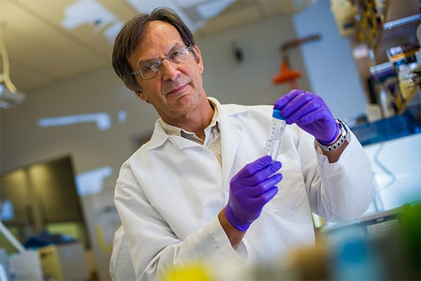Harvard Medical School Professor Bruce Spiegelman was among the researchers who demonstrated that symptoms of cachexia in mice with lung tumors improved or were prevented when they were given an antibody that blocked the effects of a protein, PTHrP, secreted by the tumor cells.