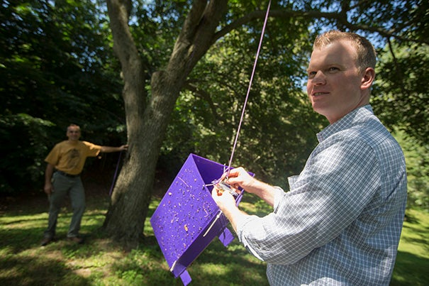 """""""John DelRosso [background], our head arborist, was leading a group of summer interns here through the Fraxinus [ash] collection, and one of the interns spotted this suspicious-looking beetle in the trap,"""" said Andrew Gapinski (right), manager of horticulture at the Arnold Arboretum."""