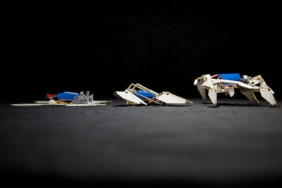 """Getting a robot to assemble itself autonomously and actually perform a function has been a milestone we've been chasing for many years,"" said Robert J. Wood, Charles River Professor of Engineering and Applied Sciences at the Harvard School of Engineering and Applied Sciences (SEAS) and a core faculty member at the Wyss Institute for Biologically Inspired Engineering at Harvard."