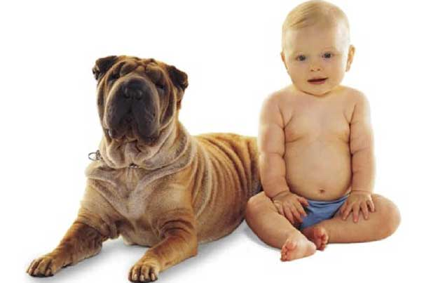 """""""Although this is a small study ... the results suggest there is a common brain network important for pair-bond formation and maintenance that is activated when mothers viewed images of either their child or their dog,"""" says Luke Stoeckel, MGH Department of Psychiatry."""