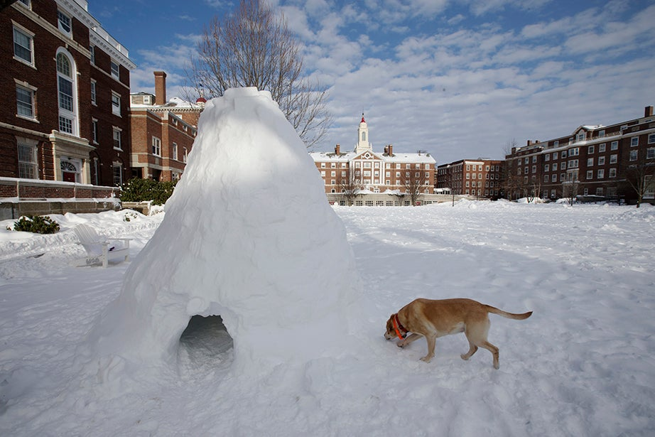 Cabot and Pforzheimer Houses on Radcliffe Quadrangle the day after the blizzard. Rose Lincoln/Harvard Staff Photographer