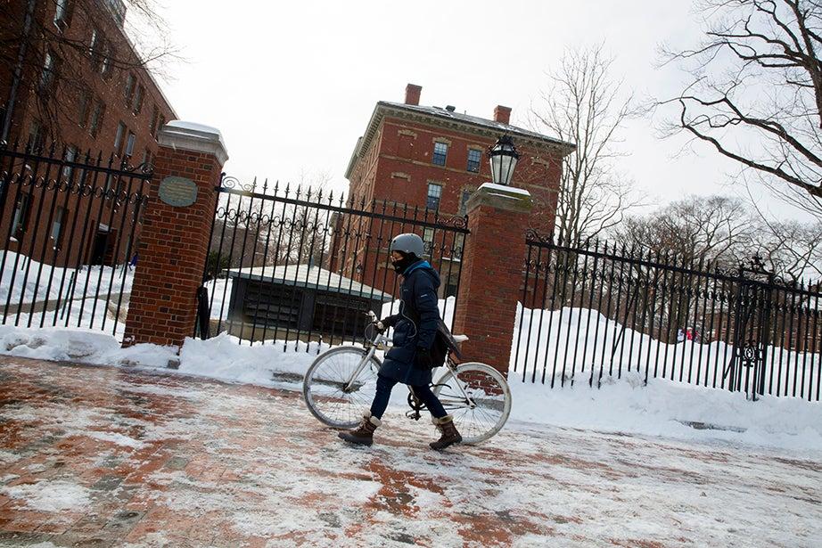 A bicyclist walks her bike alongside Harvard Yard. Rose Lincoln/Harvard Staff Photographer