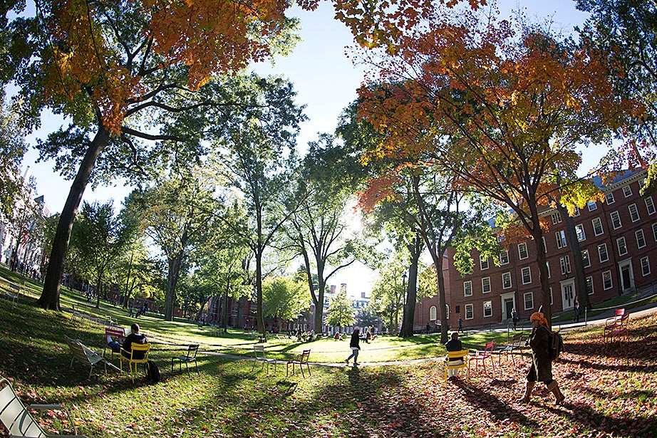 In Harvard Yard, sunlight bolts through orange and green leaves. Harvard's Sustainability Plan, adopted in 2014, is focused on enhancing the well-being of the campus community. Kris Snibbe/Harvard Staff Photographer