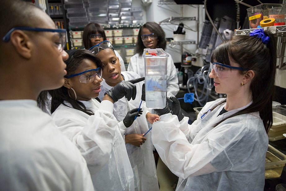 Jermont Haines (from left), Tukoya Boone, and Aaron Abdulmalik get a lesson in zebrafish from Graduate School of Arts and Sciences student Tessa Montague. Kris Snibbe/Harvard Staff Photographer