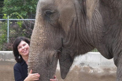 """""""Myanmar has the second-largest population of Asian elephants in the world, and the largest population of captive elephants in the world,"""" said best-selling author Vicki Croke. """"Now, as Myanmar is opening up, a whole bunch of conservation groups are rushing in there. What will become of the elephants in Myanmar is an open question, with multinational corporations coming in."""""""