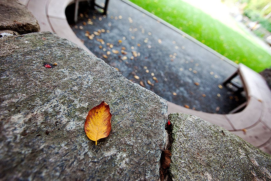 A single fallen leaf landed on the horseshoe-shaped bench in the Sunken Garden in Radcliffe Yard. Rose Lincoln/Harvard Staff Photographer
