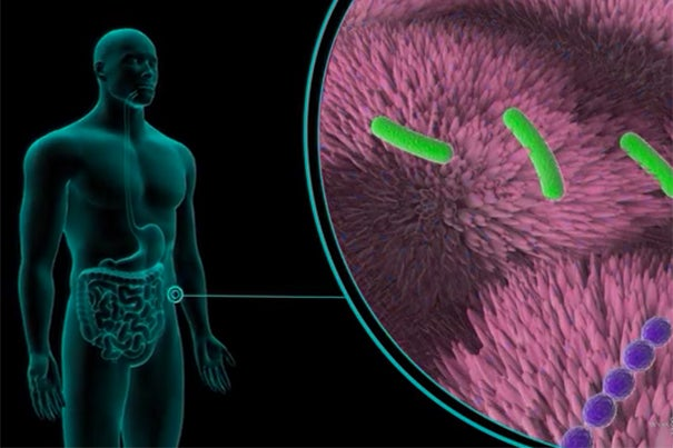 The microbiomes in our gastrointestinal tracts regulate wide-ranging physiological, metabolic, immunologic, cognitive, behavioral, and psychiatric traits. Understanding and manipulating human microbiomes could be key to managing physical and mental health.