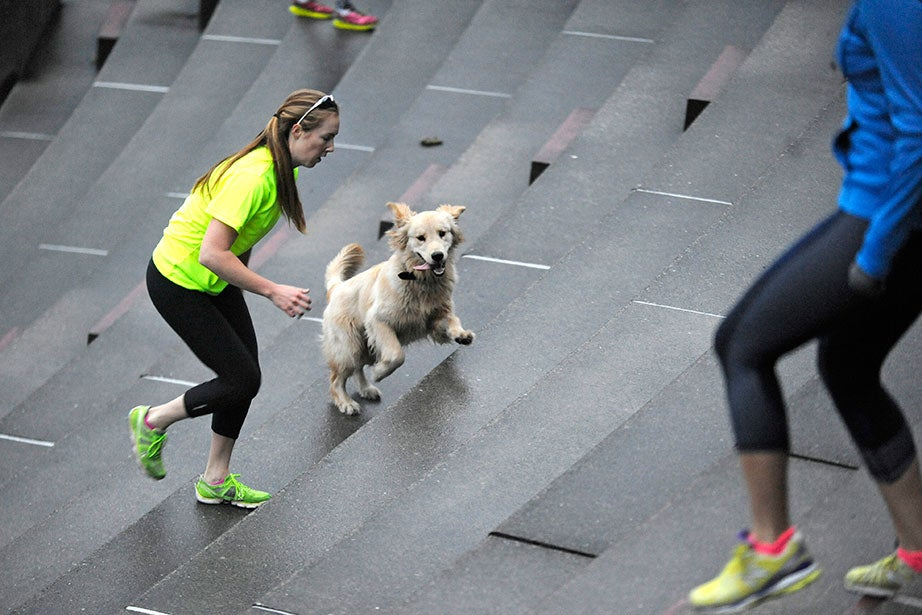November Project members, both human and canine, run the Harvard Stadium steps early on a Wednesday morning. This golden retriever seems to be enjoying its workout, possibly more than the woman beside it.
