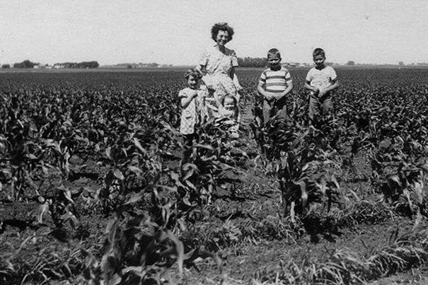 A 1951 photograph shows corn plants growing about a foot apart. Today, intense farming puts the stalks within inches of each other. The change in land use has had a surprising impact on the surrounding climate.