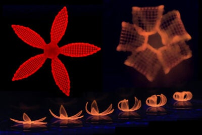 After printing, the 4D orchid is immersed in water to activate its shape transformation.