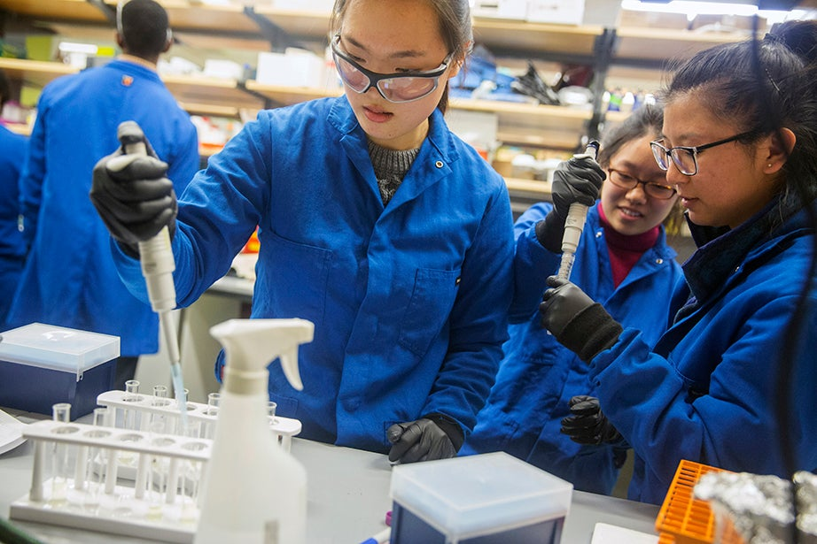 """Rebekah Chun '19 (from left), Una Choi '19, and Sherry Gao '19 work during """"iGEM BioDesign Bootcamp,"""" which helps participants build a solid foundation in essential life-science research techniques through an intensive laboratory and theoretical introduction inside the Northwest lab. Kris Snibbe/Harvard Staff Photographer"""