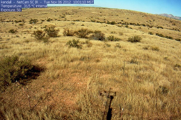 "To understand the effects of climate change on grasslands, researchers created a model of both the hydrology and vegetation of the region, then ""trained"" it using present-day data gathered from the PhenoCam Network, a collection of 250 Internet-connected cameras that capture images of local vegetation conditions and greenness every half hour."