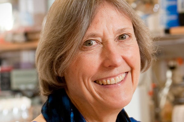 Widely recognized as a leader in bringing meiosis research into the modern era, Nancy Kleckner, the Herchel Smith Professor of Molecular Biology, received the Thomas Hunt Morgan Medal. Kleckner has pioneered efforts to combine traditional genetic approaches with molecular biology, microscopy, physics, and modeling, techniques that have now become commonplace.