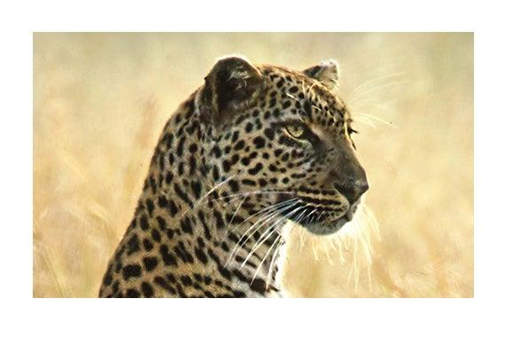 leopard_570