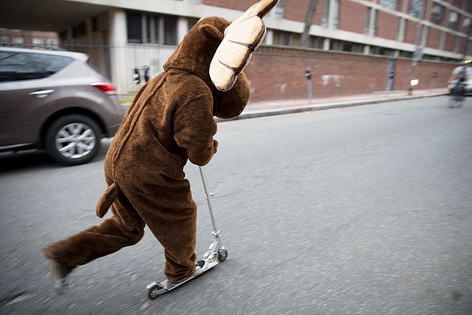The Dunster House moose rides a scooter to the Yard as students celebrate Housing Day — the day upperclassmen deliver letters to freshmen informing them of their assigned housing for the next three years. Rose Lincoln/Harvard Staff Photographer