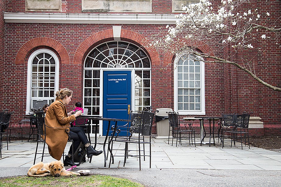 Cassandra Robertson is a tutor in Lowell House, and often eats at the dining hall with her dog, Stella.