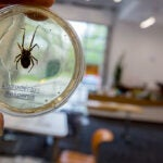 """The Harvard Ed Portal hosted """"Spider Superheroes,"""" a program for Gardner Pilot Academy third-graders to learn about spiders."""