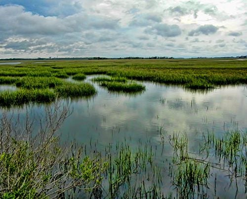 Salt marshes provide a natural barrier of coastal protection along Georgia's shoreline.