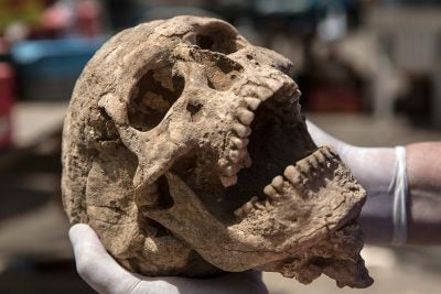 A skull from the excavation of the Philistine cemetery by the Leon Levy Expedition to Ashkelon.