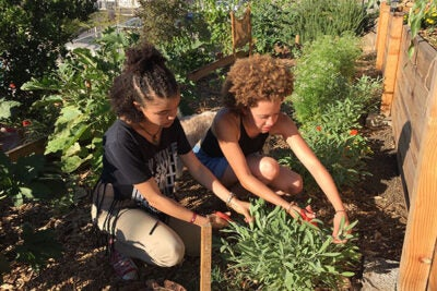 Los Angeles high school student Mikayla (left) and Amanda Beattie '17 harvest sage at the L.A. farm where Beattie did an internship through Harvard's Mindich Service Fellowships.