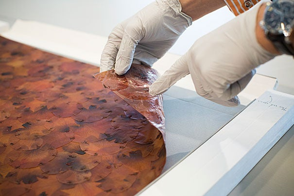 A new exhibit at Harvard Art Museums will feature a piece by Doris Salcedo called A Flor de Piel, a piece of giant tapestry made of rose petals. Narayan Khandekar (pictured), Director of the Straus Center, speaks about the conservation of the piece. Stephanie Mitchell/Harvard Staff Photographer