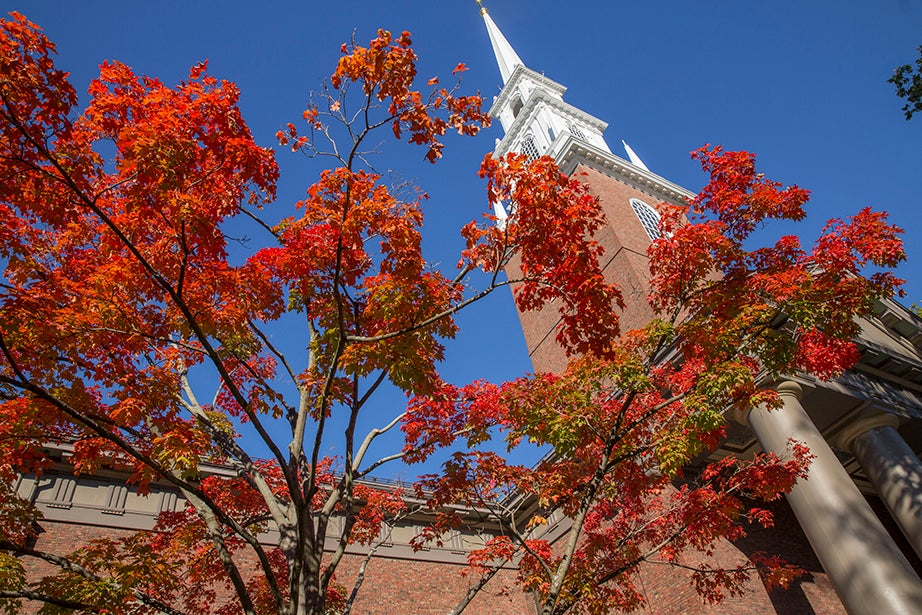 Memorial Church is framed by foliage. Kris Snibbe/Harvard Staff Photographer