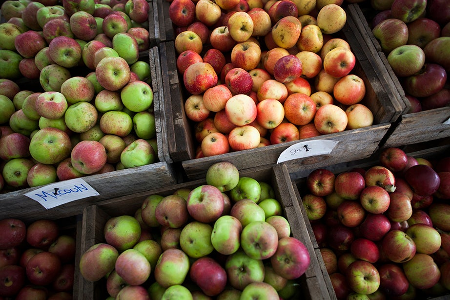 Apples in plentiful supply are for sale at the Harvard Farmers' Market. Stephanie Mitchell/Harvard Staff Photographer