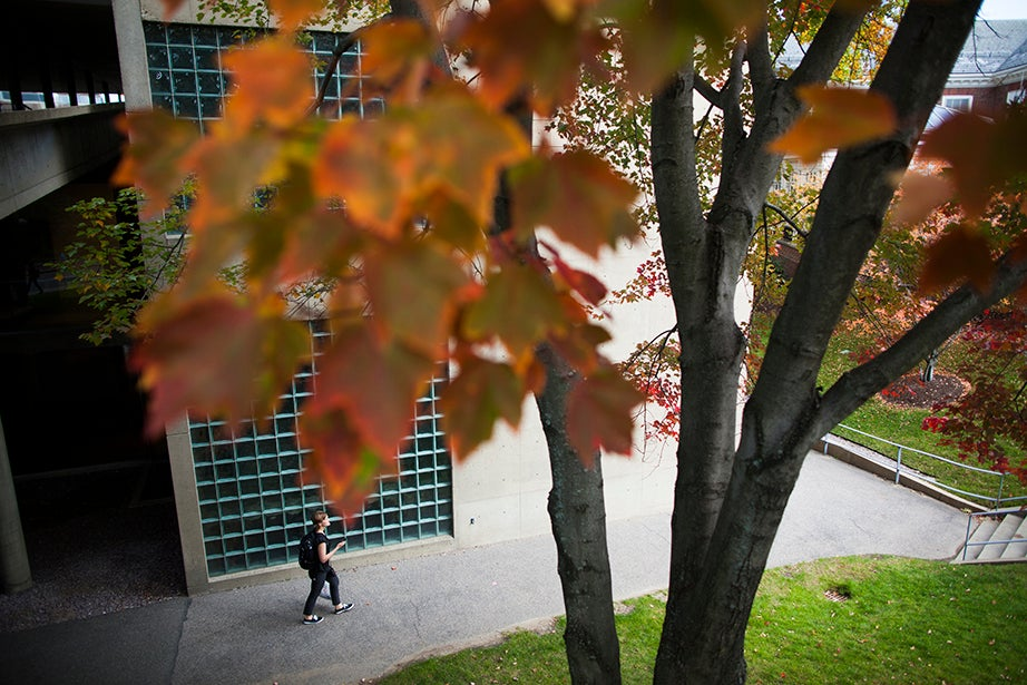 A student walks by the Carpenter Center, where autumn colors thrive. Stephanie Mitchell/Harvard Staff Photographer