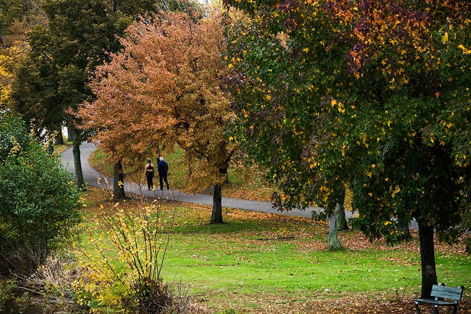 A tree-lined path along the Charles River encircles amblers in autumn colors. Stephanie Mitchell/Harvard Staff Photographer