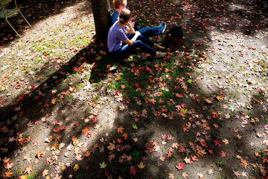 Colorful leaves blanket Harvard Yard. Rose Lincoln/Harvard Staff Photographer