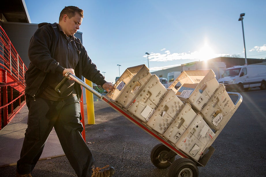7:41 a.m. — Harvard University Mail Service employee Maggie Norburg transfers mail from the sorting center to a truck for delivery.